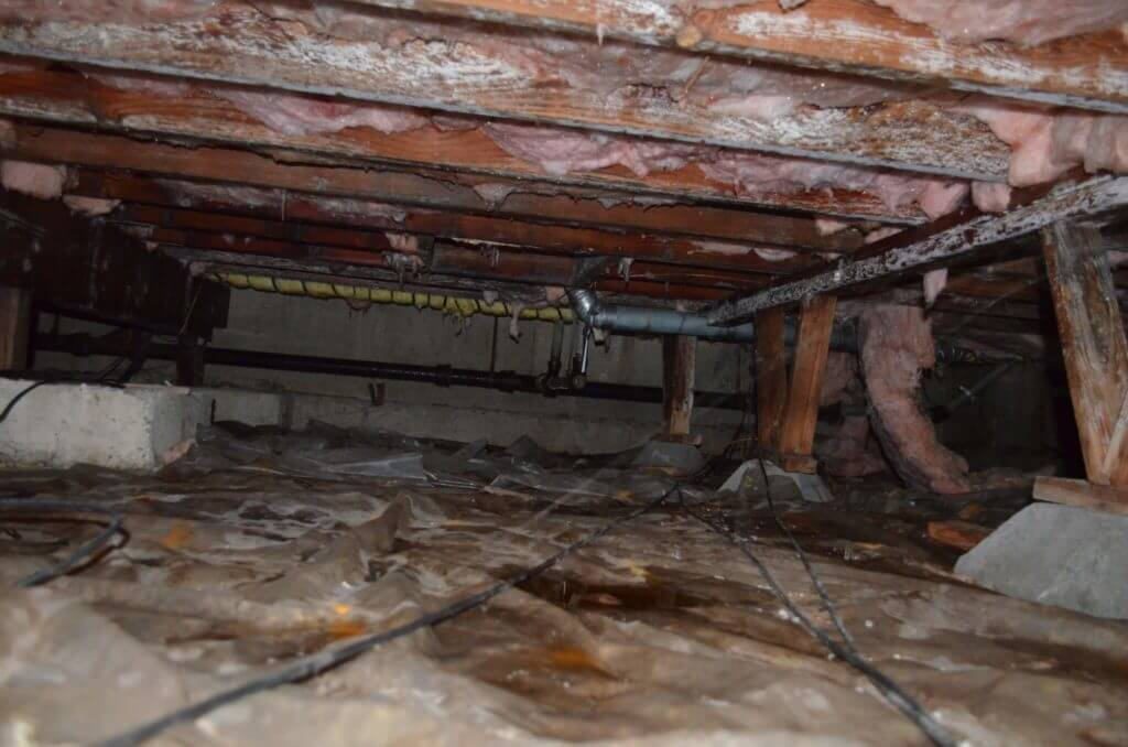 Mold Growth in the Crawl Space